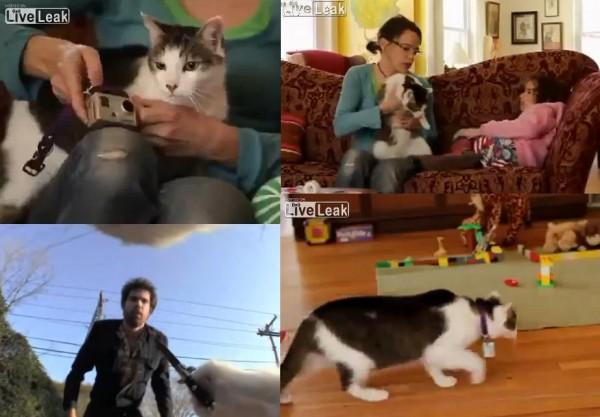 Co robi Twój kot, kiedy nie ma go w domu? Sprawdź!