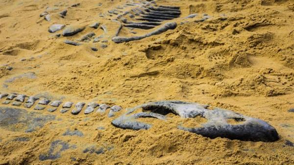 Niezwykłe znalezisko polskich archeologów