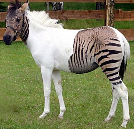 Niezwykłe narodziny w poznańskim zoo