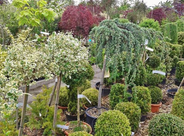Zaskakująca moc roślin doniczkowych